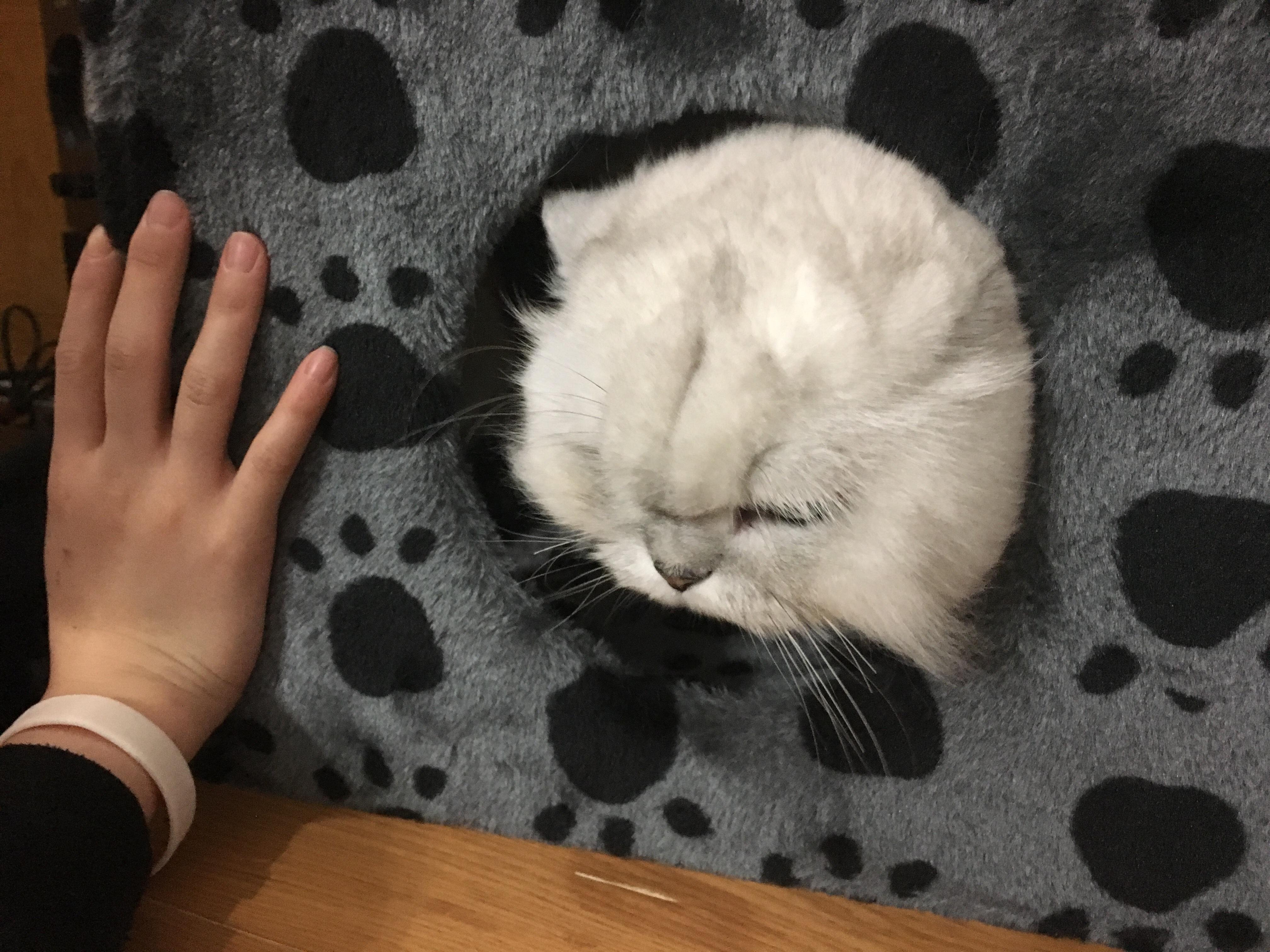 貓咪無奈探頭