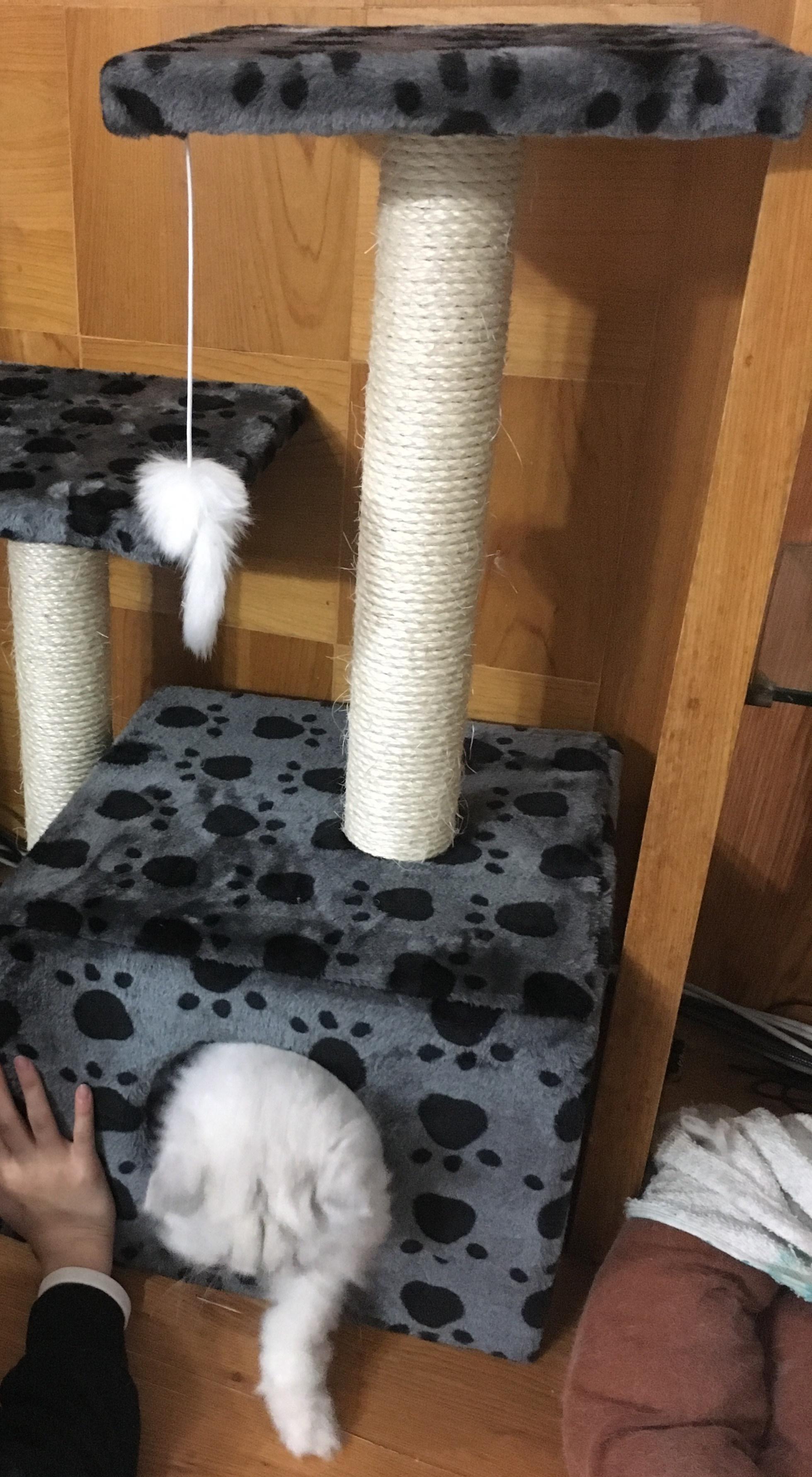 貓咪爬出貓跳板